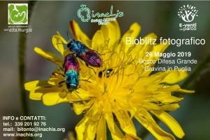 BioBlitz DifesaGrande 26 Maggio2019-1RIDOTTO